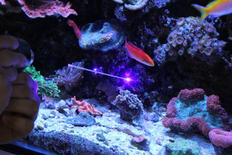 Aquarium Creations Home